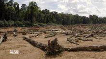 Déforestation : 27 000 hectares de l'Amazonie française ont déjà été détruits par l'exploitation minière