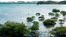 Bisher Corona-freies Neukaledonien meldet erste Infektionen