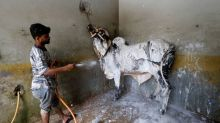 Pakistanis take livestock to 'cow wash' ahead of Eid
