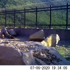 Animal Crossing: Overpass Helps Wildlife Safely Migrate in Parley's Canyon, Utah