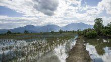 Agricultores tailandeses aceitam prejuízos para salvar os meninos da caverna