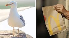 Man 'bites seagull' after bird tries to steal McDonald's meal