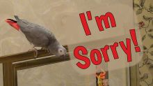 """Apologetic parrot says """"I'm sorry"""" before flying away"""