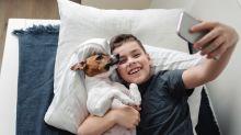 Tus perros contentos y tú más con estos tapetes entrenadores que son un salvavidas