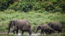 Gabon is first African country paid to protect its rainforest