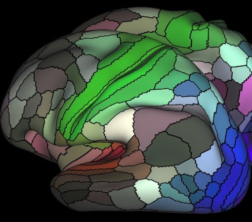 Astonishingly detailed brain map doubles the number of known areas in the cortex