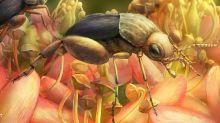 Preuves de pollinisation par des insectes il y a 99 millions d'années