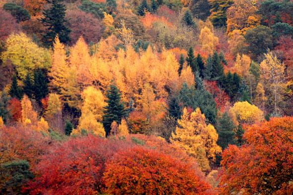 <p> This area has numerous for wonderful scenic walks. Stroll around Glentress to see specimen trees and waterfalls, or try Thornilee Forest in the Tweed Valley Forest Park for longer rambles.</p>