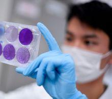 Coronavirus vaccine 'almost 100pc certain to be found'