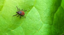 How Quickly Can an Attached Tick Make You Sick?