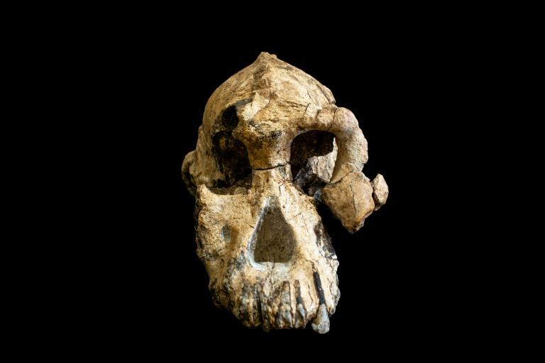 "The skull, known as ""MRD"", was discovered not far from the younger Lucy -- the ancient ancestor of modern humans (AFP Photo/HO)"