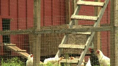 Police: Ga. girl forced to live in chicken coop