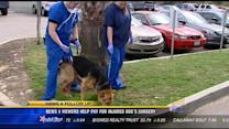 News 8 viewers help pay for injured dog's surgery