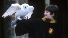 "Igitt! Dieses ""Harry Potter""-Detail hätten Fans lieber nicht erfahren"