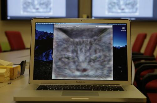 Google simulates the human brain with 1000 machines, 16000 cores and a love of cats