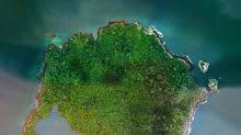 Panamá decide proteger isla en el Pacífico, hábitat de aves
