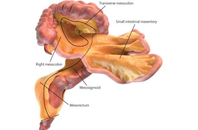 Scientists confirm a 'new' human organ