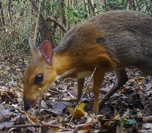 Vietnam deer rediscovered after nearly 30 years
