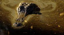 Trump environmental rollback spurs mining near Okefenokee