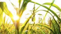 Now I Get It: GMO controversy explained