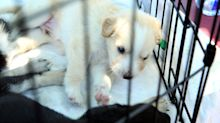 Scammers are tricking people into buying puppies that don't exist during lockdown, police warn