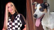 Anitta encontra cão perdido na porta de sua casa e procura pelos donos