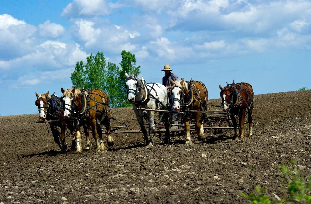 An Amish farmer uses a horse drawn harrow in a field on his farm near Wilson, Wisconsin