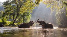 Thailand's elephant sanctuaries face crisis without tourists