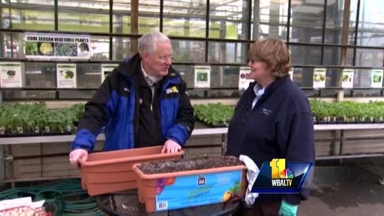 Sunday Gardeners show you how to grow edibles in planters