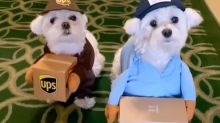 These cosplaying puppies are the cutest thing you'll see today