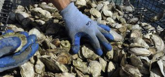 Officials warn of spike in shellfish-related illness
