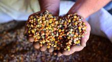 Produção agropecuária da América Latina crescerá 17% na próxima década, dizem FAO e OCDE