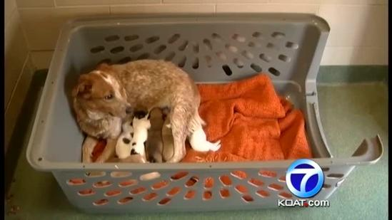 Santa Fe vet appears in court on animal abuse charges