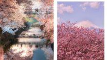 2020 年日本櫻花攻略:一篇把花期、賞花地點和酒店等資訊整合給你!