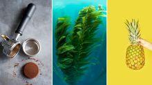 Von Kaffeesatz bis Algen: Nachhaltige Kleidung aus ungewöhnlichen Materialien