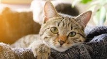 Pet cat becomes first animal in the UK to test positive for COVID-19