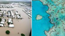 Great Barrier Reef turtles and wildlife could die as Queensland's flood devastation widens