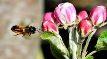 Caldo, Coldiretti: salva semine di primavera dopo pioggia no stop