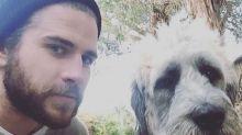 Giddyup! See Liam Hemsworth 'Ride' His Gigantic Rescue Dog