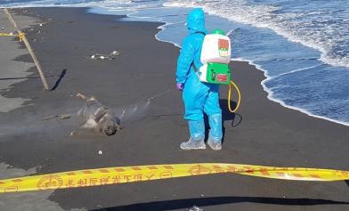 宜蘭海邊驚見死豬 議論紛紛