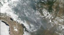 Weltweite Bestürzung über Waldbrände in Brasilien