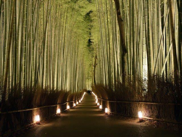 嵐山 20182019燈飾