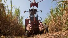 Indian sugar stocks rise on reports government plans bailout for mills