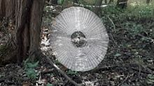 'Human-sized' spider web found in Missouri forest