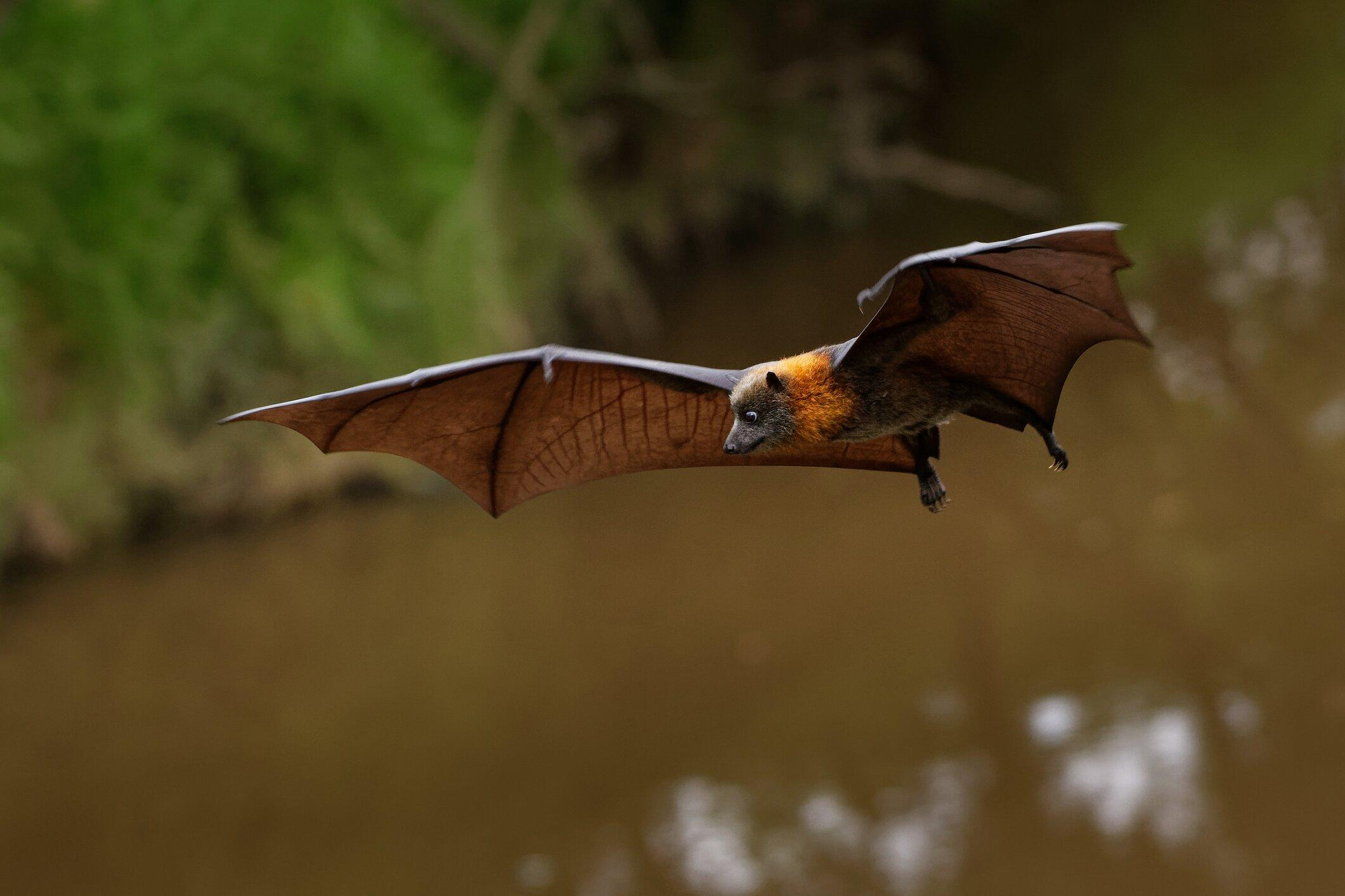 WHO Scientist: Coronavirus originated in bats and can infect cats