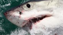 Shark kills 17-year-old girl surfing with father off coast of Western Australia