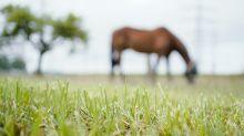 Tierhalter besorgt wegen verletzter Pferde