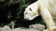 Après l'histoire de l'ours Olaf au zoo d'Amnéville, trois questions sur la fin de vie des animaux en captivité