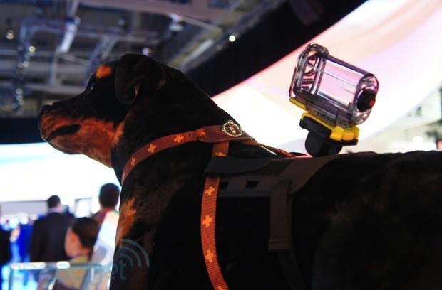 Sony's Action Cam Pet Mount concept may lead to man's best YouTube videos