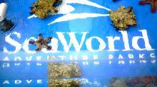 SeaWorld looks to Big Bird for help, Lyft drives toward earnings debut
